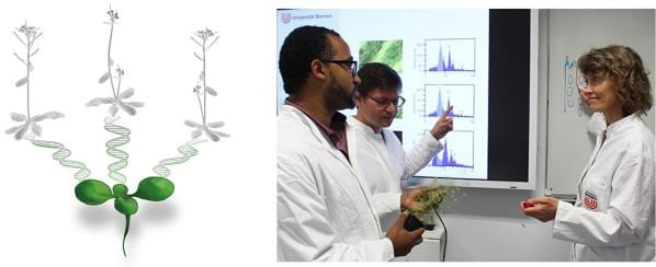 Polyspermy in plants, as investigated by a group led by Prof Groß-Hardt